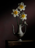 Daffodils in Pewter Teapot