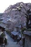 Sakura 2017 at Kyoto