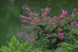 Nature & Flower Vol.3