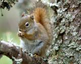 DSC08760 - Another Squirrel Shot...