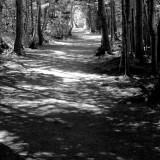 DSC09210 - Sunlight On Trail