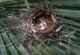 Artistic Beauty of a Cardinal's Nest
