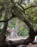 Trees Make Wonderful Friends