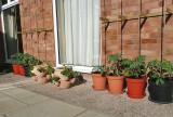 misc_plants