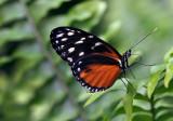 Papillons en liberté 2017