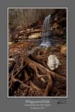 Whippoorwill Falls Stump 1.jpg