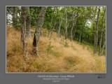 North Fork Mtn Grassy Hillside.jpg