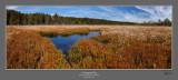 Cottongrass Bog 5 760.jpg