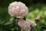 Fleurs - Flowers
