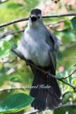 Angry Catbird