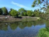 Pond Rehabilitation