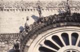 Bari Cathedral or S Sabino 041.jpg