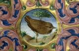 Ferrara Bird in manuscript 84 142.jpg