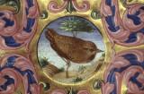 Ferrara Bird in manuscript 84 160.jpg