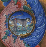 Ferrara Monkey in manuscript 84 141.jpg