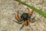 Insekten en spinnen  Piet Brouwer
