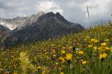 Alpen rotstuin