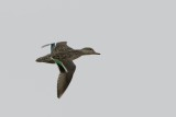 water_sea_birds_and_waders