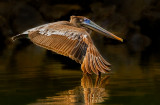 Wing tip reflection