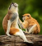 Monkey_G_Spot