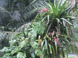 DSCN4973¸Barrett_20170311_1134_bromeliad and Swiss Cheese Philodendron.JPG