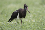 Birds of  Namibia