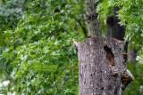 Tree-clinging Birds
