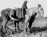 1916 - Shells carried on horseback