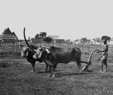 1867 - Ploughing Day Ceremony