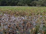 marshland.jpg