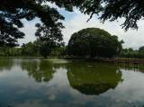 pond in the park.jpg
