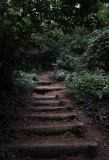 path upwards.jpg