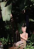 jungle contemplation.jpg