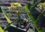 flowering.jpg