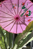 pink umbrella and plant.jpg