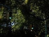 the green light.jpg