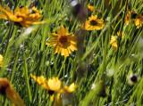 morning_flowers.jpg