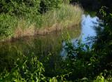 still_water_morning.jpg