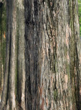 trunks.jpg