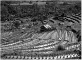 agricultural.jpg