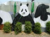 panda feast.jpg