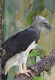 Harpy Eagle  0616-1j  Rehab Facility near Anton