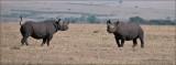 Black Rhino Faceoff