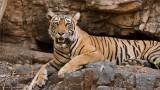 Tigress Lightning