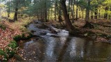 Samsung - A Creek in the Forest