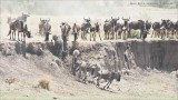 Mara River Crossing - Tanzania