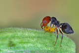 Life by Aphids and Ants