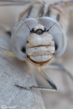 Strange faces    :  portrait  insects