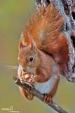scoiattolo176.jpg