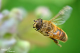 Best of insects in flight